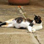 دوری از گربه در دوران بارداری