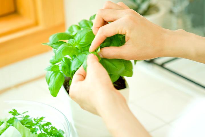 گیاهانی که نباید در بارداری مصرف کرد